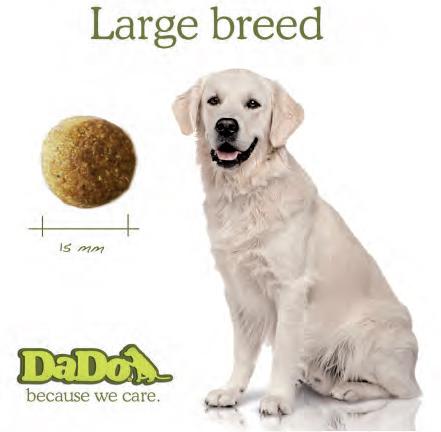 DADO - puppy